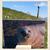 Gratis kaart zeehondje